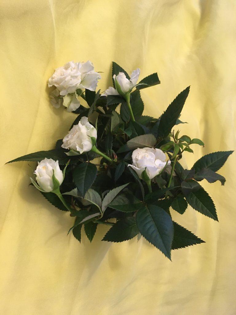 Un món de roses. Dora Catalá