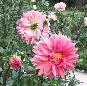 flor en el Día Mundial de la Poesía